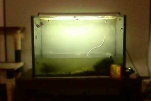 Fish tank with light and accessories Caboolture Caboolture Area Preview