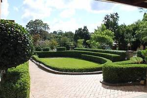 Hedge Trimming , Pruning  and lawn mowing Services Meadowbank Ryde Area Preview