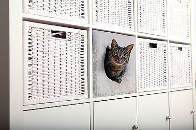 Regal Plüsch (Katzenhöhle Kuschelhöhle für Katzen für IKEA Regal Kallax Expedit Trixie)