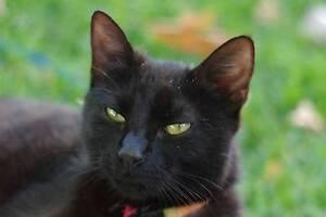 Black Female Cat for Free Gilgandra Gilgandra Area Preview