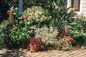 PLANTS GALORE - SWAN HILL - ALL MUST GO Swan Hill Swan Hill Area Preview