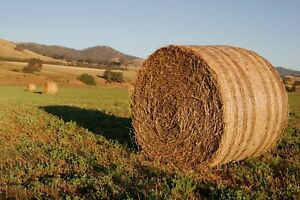 Needed round hay bales