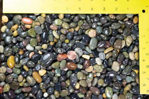 3 Lbs Large Beach Pebbles for Bonsai Tree Humidity Tray and Zen / Fairy Garden