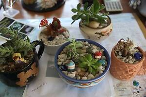 Succulents Specials Bomaderry Nowra-Bomaderry Preview