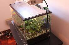 Fully Equiped Fishtank + Eheim 2211 Filter + Cabinet Matraville Eastern Suburbs Preview