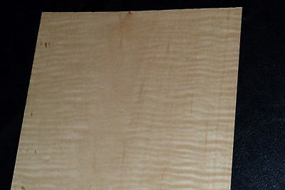 Curly Maple Raw Wood Veneer Sheets 5 X 58 Inches 142nd 8632-50