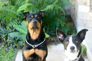 2 beautiful dogs need a good home Nambour Maroochydore Area Preview