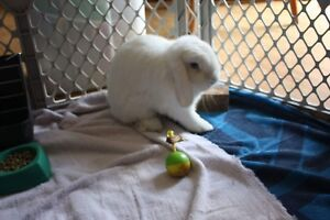 Adorable loving bunny needs a new home
