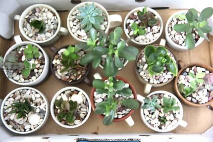 Plants Specials