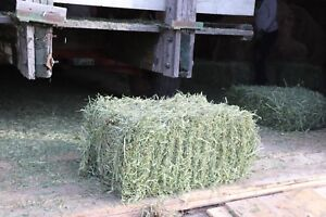2018 first cut square bales of hay