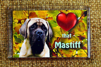 Mastiff Gift Dog Fridge Magnet 77x51mm Free UK Postage Birthday Gift