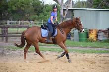 Horse - TB Cross Joondalup Joondalup Area Preview