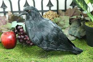 NEW-Black-Real-Size-Raven-Horror-Haunted-Halloween-Raven-Bird-Crows-Taxidermy