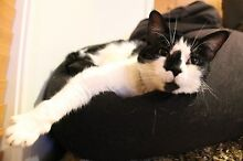 12 year old Female Moggy needs new home Brisbane City Brisbane North West Preview