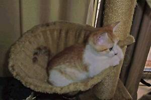 Kittens for free Sawyers Gully Cessnock Area Preview