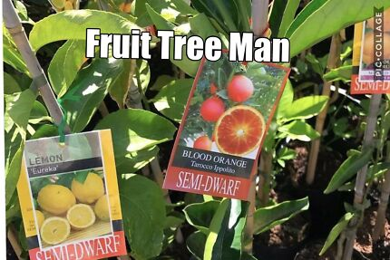 FRUIT TREES $40-$180