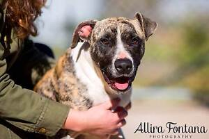CRITICAL GINNY IS ON DEATHROW TODAY COULD BE HER LAST DAY Mulgrave Hawkesbury Area Preview