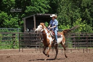 """Non Registered Paint Mare """"Cheyenne"""""""