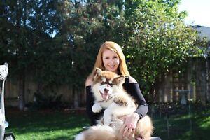 Dog Sit / Dog Walk & Babysit