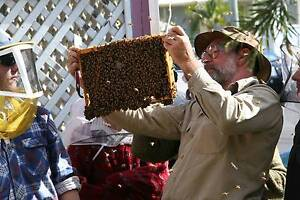 Begining in Bees An introduction to Beekeeping Coffs Harbour Coffs Harbour City Preview