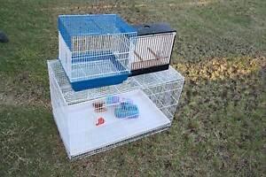 Bird cages Ipswich Ipswich City Preview