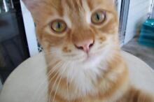 Orphaned Cat Needs Home Nundah Brisbane North East Preview