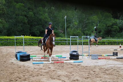 Wanted: 5 star home looking for free lease horse