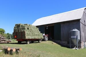 First cut square bales of hay