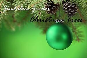 Real Fresh Cut Christmas Trees - Jindalee Girl Guides Jindalee Brisbane South West Preview