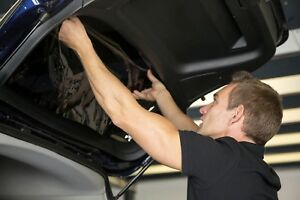 Looking for experienced tinter and ppf installer