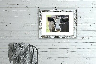 Black & White Cow Farm Animal Farmhouse Art Country Decor Matted Picture A565 ()