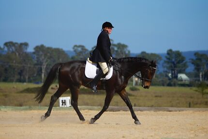 Gorgeous Warmblood Hanoverian Gelding Abbotsford Canada Bay Area Preview