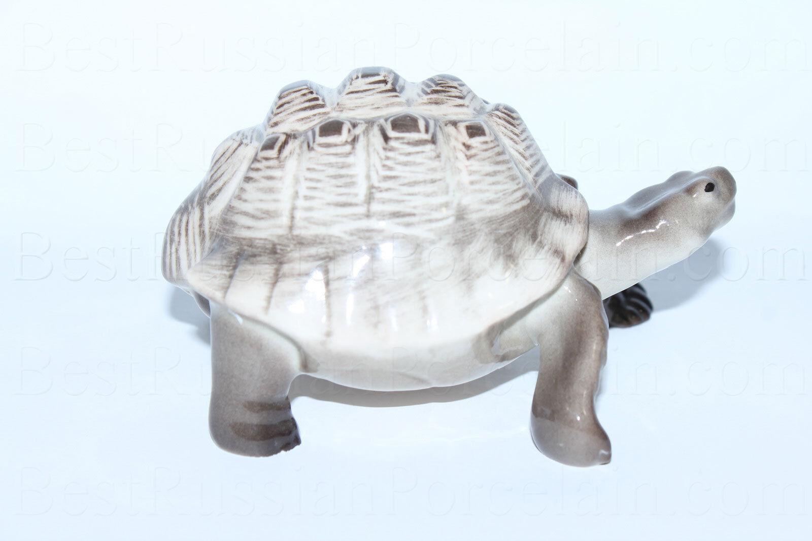 хотите черепахи из фарфора италия фото отец был разбогатевшим