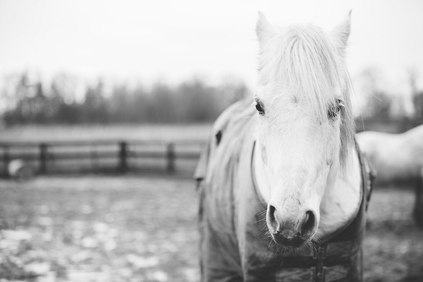 Neddy Wear Horse Rugs & Accessories