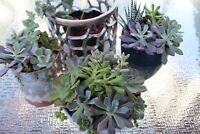 Succulent gifts, centrepieces and pastry favours