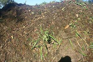 Garden Mulch/Compost Blend Narangba Caboolture Area Preview
