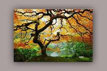 Maple Tree: Mind Blowing Glow in the Dark Canvas Printing Pakenham Cardinia Area Preview