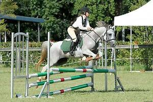 Beautiful Arab Mare for Free Lease Albany Albany Area Preview
