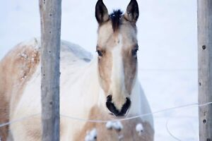 8 year old mare for sale