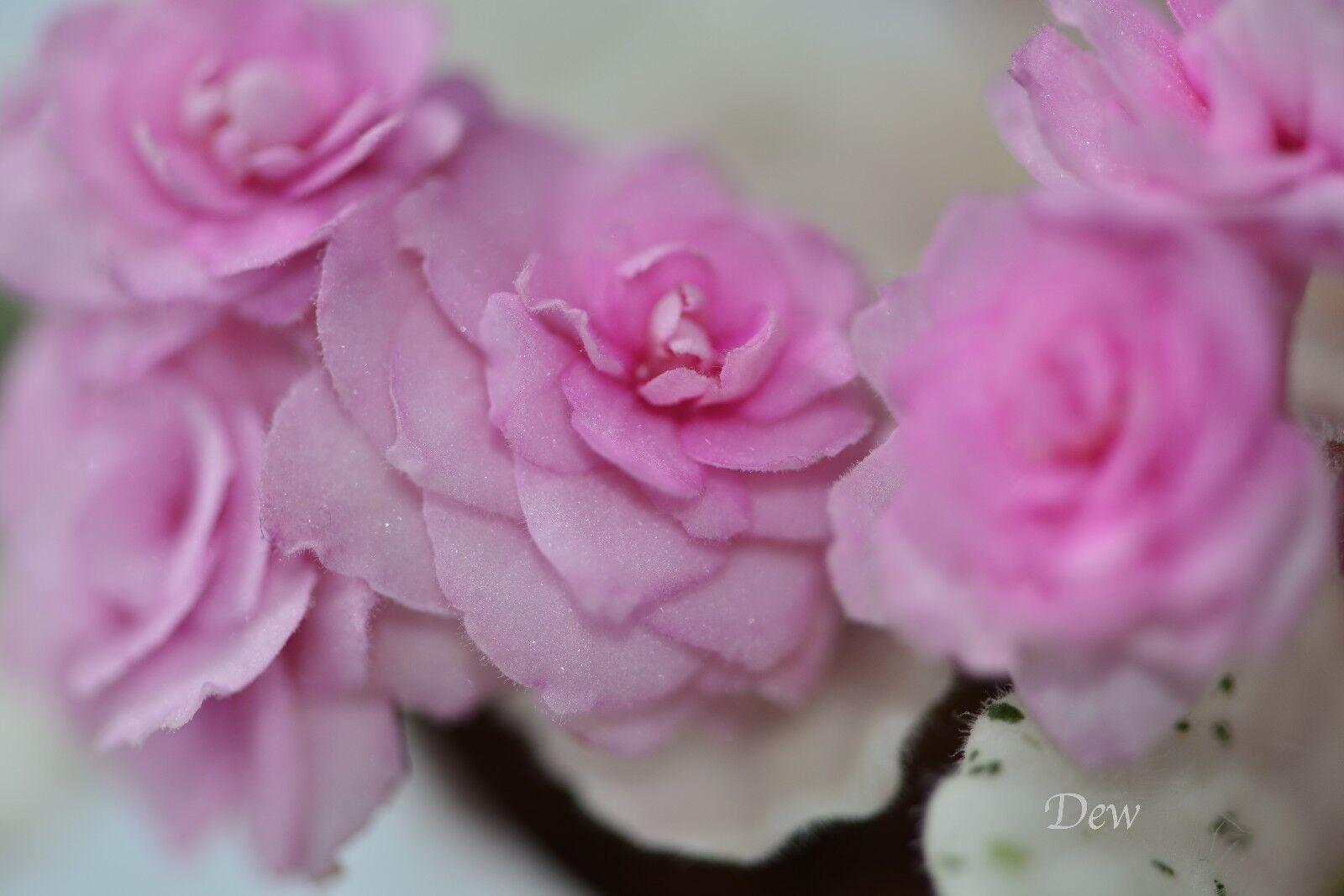 Фиалки розовый букет