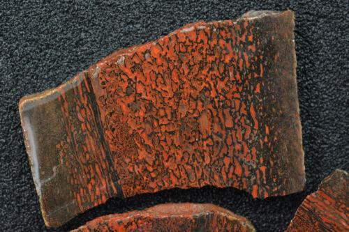 Agatized Dinosaur Bone Utah 84 grams