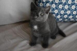 Female kitten ready to go