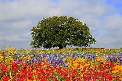 oaktreegifts