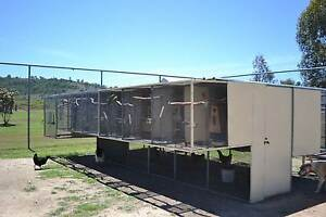 Complete Parrot, Aviary and Accessory Clearance Texas Inverell Area Preview