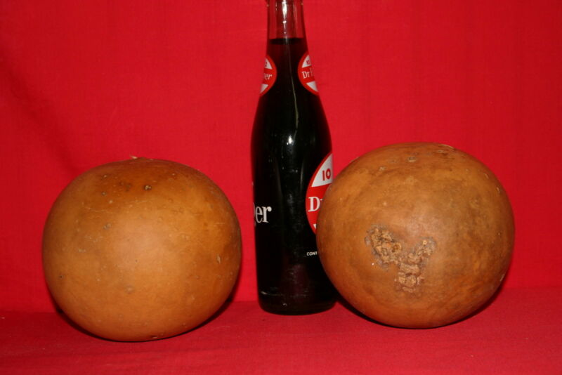 GROUP OF 10 CANNON BALL GOURDS ( DRIED AND CLEANED)