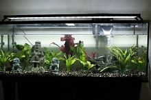 Complete 180L tank with tropical fish and stand Taringa Brisbane South West Preview