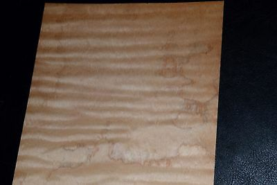 Curly Maple Raw Wood Veneer Sheets 6 X 33 Inches 142nd   8632-38