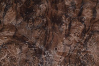 Walnut Burl Raw Wood Veneer Sheets 12 X 17.5 Inches 142nd Thick  7369-33