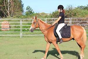 URGENT: Pony for sale Caboolture Caboolture Area Preview