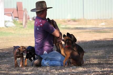 Hunting Pups